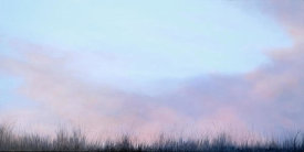 Emmeline Craig - Grasses with Rosy Sky