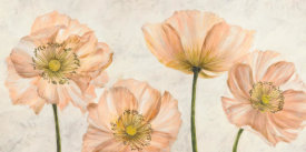 Luca Villa - Poppies in Pink