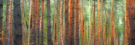 Pangea Images - Colors of the Woods
