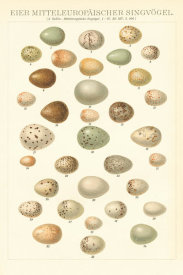 Wild Apple Portfolio - Songbird Egg Chart