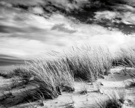 Brookview Studio - Beach Dunes