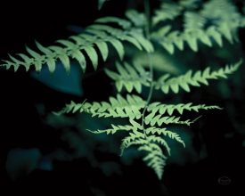 Brookview Studio - Forest Fern