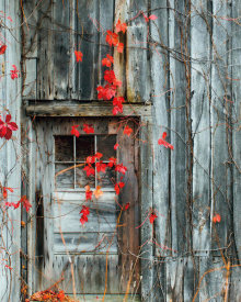 Brookview Studio - Rustic Autumn