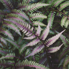 Laura Marshall - Funky Ferns VI