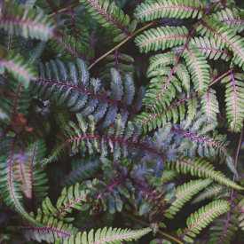 Laura Marshall - Funky Ferns V
