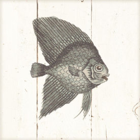 Wild Apple Portfolio - Fish Sketches III Shiplap