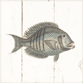 Wild Apple Portfolio - Fish Sketches I Shiplap