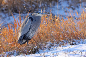 Vic Schendel - Heron in Winter I
