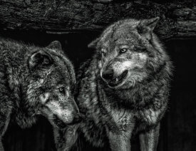 European Master Photography - Wolfpack black & white