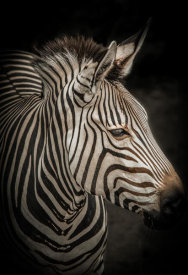 European Master Photography - Zebra 4