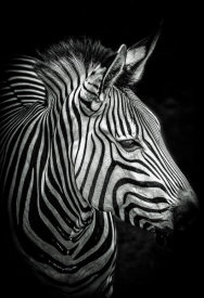 European Master Photography - Zebra 4 black & white