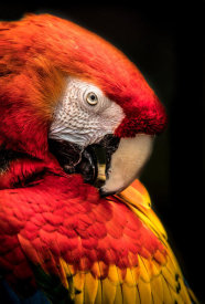 European Master Photography - Red Ara Parrot 2