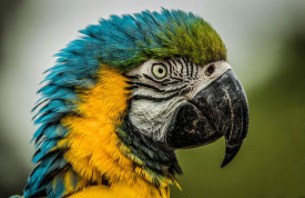 European Master Photography - Blue Ara Parrot