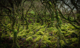 European Master Photography - Mossy Forest