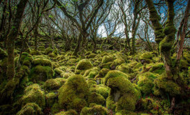 European Master Photography - Mossy Forest 3