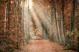 European Master Photography - Autumn Sun