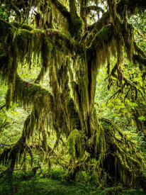 European Master Photography - Mossy Tree
