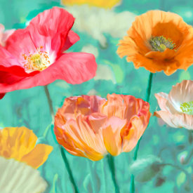 Cynthia Ann - Poppies in Bloom II