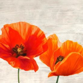 Jenny Thomlinson - Bright Poppies I