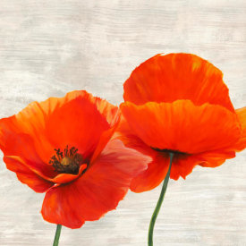 Jenny Thomlinson - Bright Poppies II