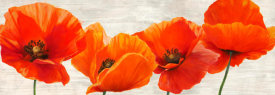 Jenny Thomlinson - Bright Poppies
