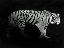 Julian Lauren - Panthera Tigris