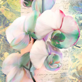 Kelly Parr - Kaleidoscope Orchid (detail)