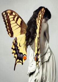 Julian Lauren - Winged Beauty 3