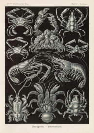 Ernst Haeckel - Crabs (Decapoda - Behnfukkreble)