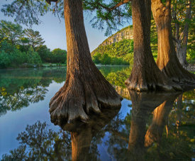Tim Fitzharris - Bald Cypress trees in river, Frio River, Garner State Park, Texas