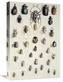Marian Ellis Rowan - Thirty-Four Insects