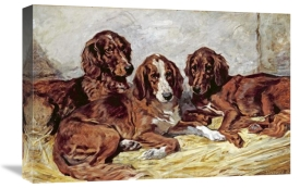 John Emms - Shot and His Friends - Three Irish Red and White Setters