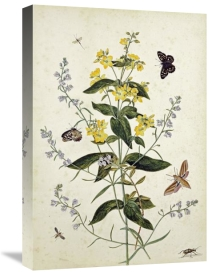 Thomas Robins Jr. - Yellow Loosestrife and Other Wild Flowers