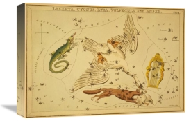 Jehoshaphat Aspin - Lacerta, Cygnus, Lyra, Vulpecula and Anser, 1825