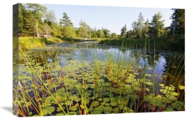 Scott Leslie - Marsh with reeds and lily pads surrounding a pond, West Stoney Lake, Nova Scotia, Canada