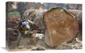 Cyril Ruoso - Logger cutting trunk of rainforest tree, Cameroon
