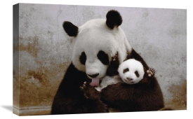Katherine Feng - Gongzhu and her young cub, Wolong Nature Reserve, China