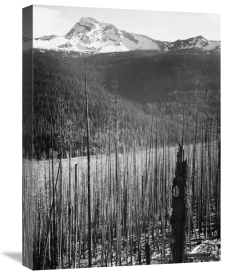 Ansel Adams - Burned Area, Glacier National Park, Montana - National Parks and Monuments, 1941