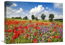 Frank Krahmer - Poppies and vicias in meadow, Mecklenburg Lake District, Germany