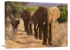 Anonymous - Herd of African Elephants, Kenya