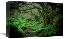 European Master Photography - Mossy Forest 9