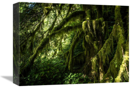 European Master Photography - Mossy tempered Forest
