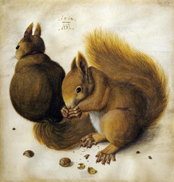 Albrecht Durer Two Squirrels One Eating A Hazelnut Art Print Global Gallery