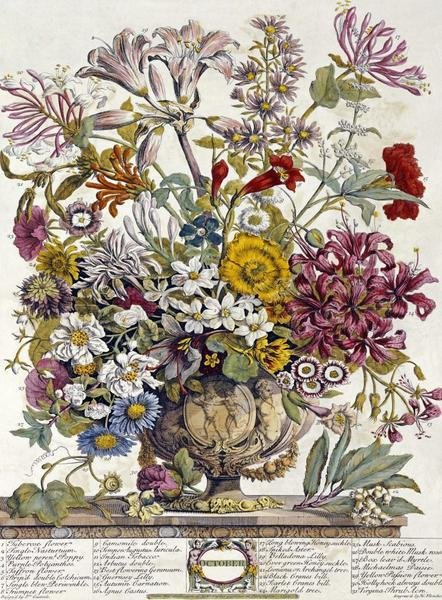Robert Furber October Twelve Months Of Flowers Art