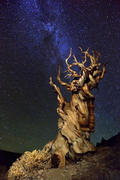 Meeting with remarkable tree
